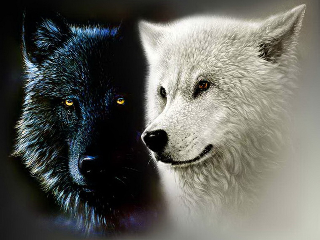 two-wolves-of-life